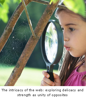 The intricacy of the web: exploring delicacy and strength as unity of opposites